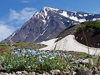 ロシア・カムチャツカ フラワーハイキング4日間