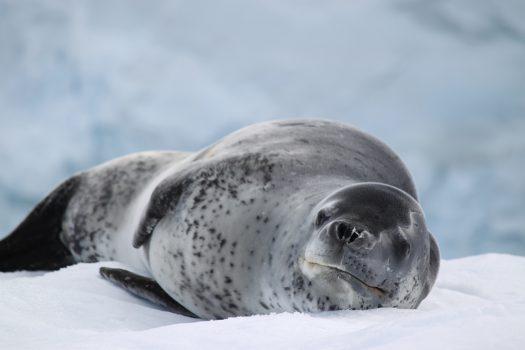 南極探検クルーズ8日間