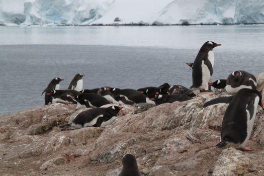 南極フライ&クルーズ6日間